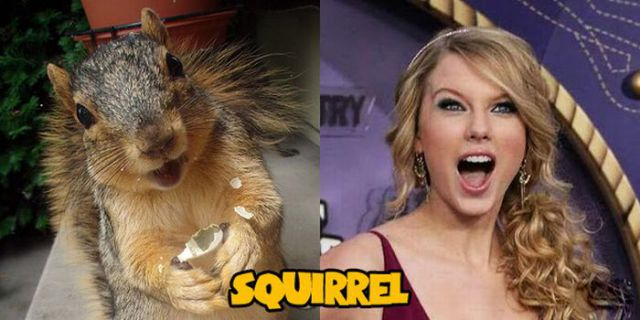 Don't They Look Alike?