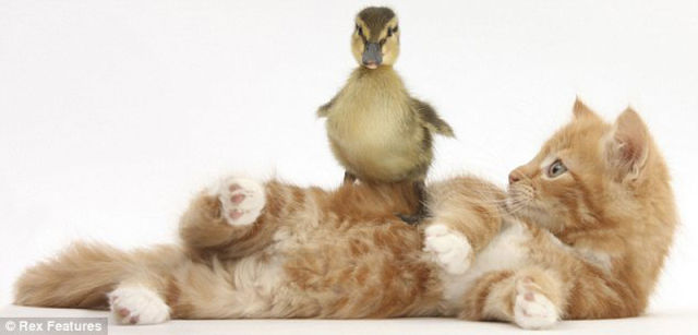 Heart Meltingly Adorable Animal Photography