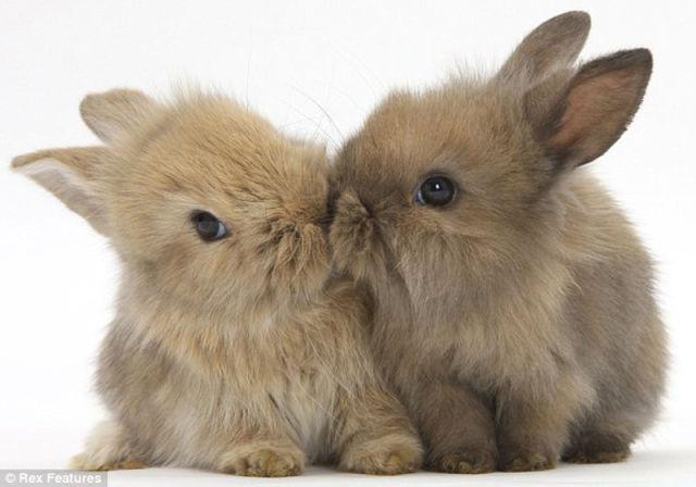 Heart Meltingly Adorable Animal Photography
