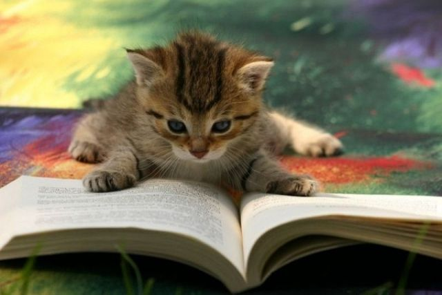 Cats Also Enjoy Reading Books