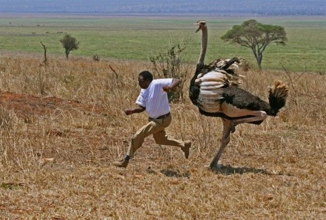 Only in Africa! Part 2