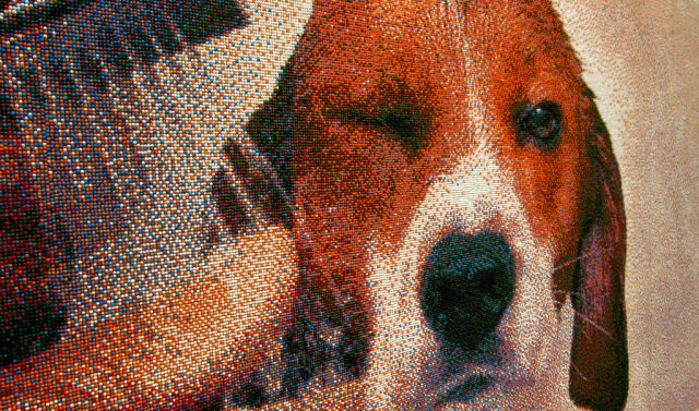 Incredible Beagle's Image