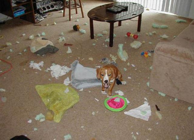 Dogs Wrecking Stuff