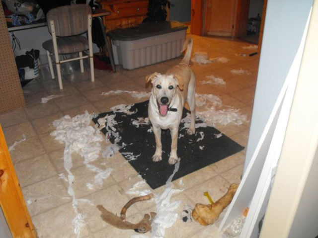 Dogs Wrecking Stuff 25 Pics Izismile Com