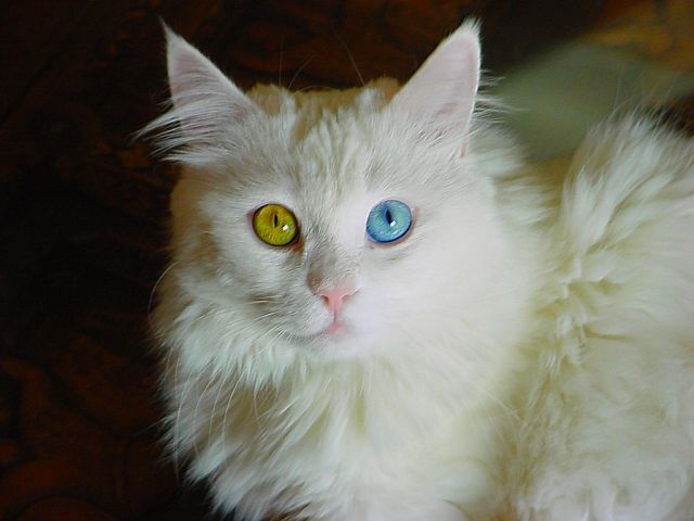 Two Different Colored Eyes