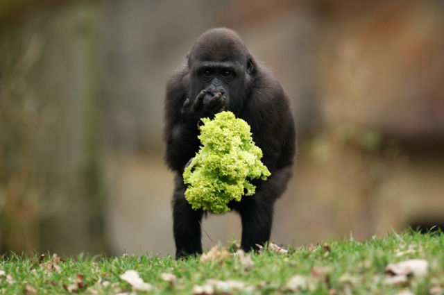 The Most Compelling Animal Photos of 2011