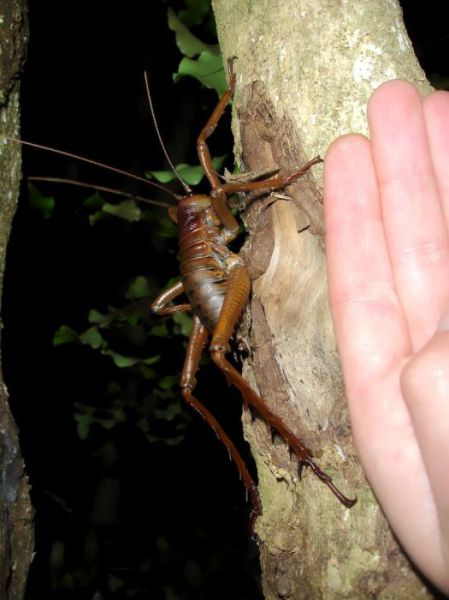The World's Largest Insects
