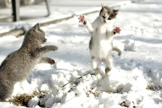 Marvelous Cats Having a Blast in the Snow