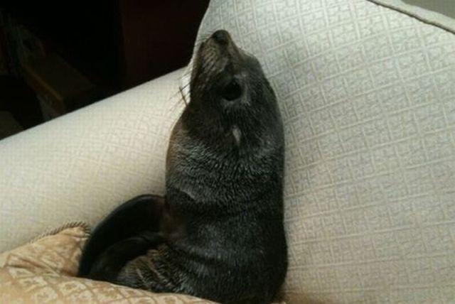 Bayi Anjing Laut Yang Kesepian
