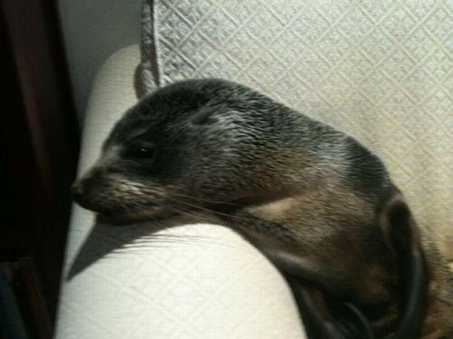Cute Little Seal in an Odd Location