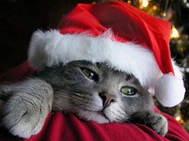 Animals Getting Ready for Christmas