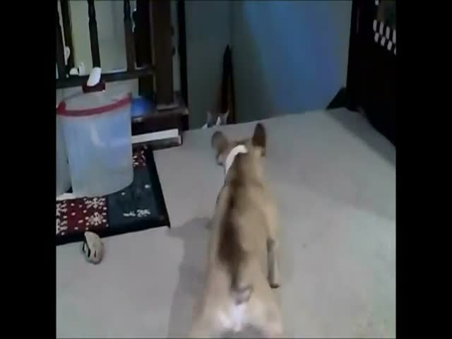 Cat Shows Dog Who's the Boss in the House