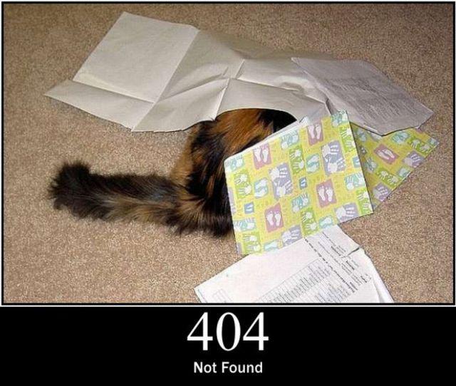 Cats as Server Errors