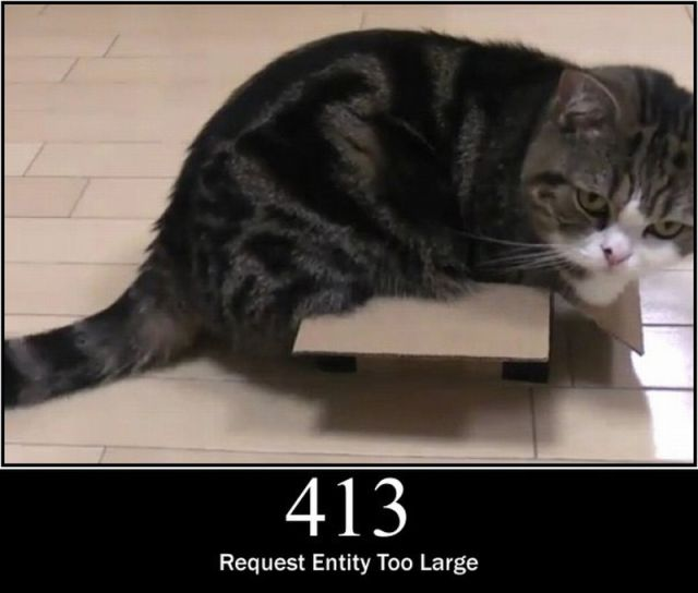 Cats as Server Errors