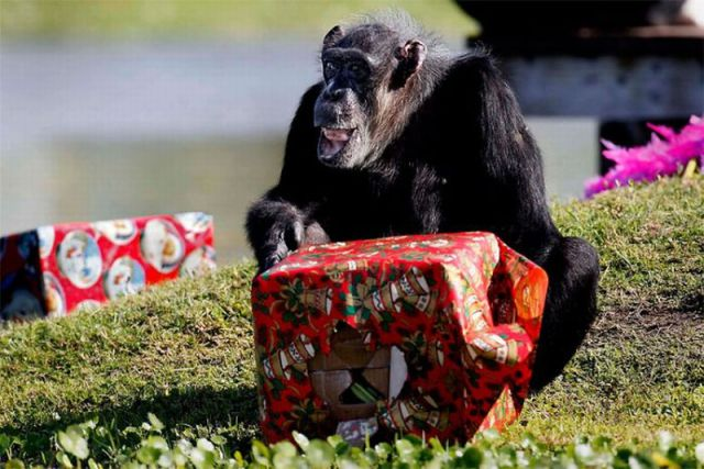 Christmas Gift Special Delivery