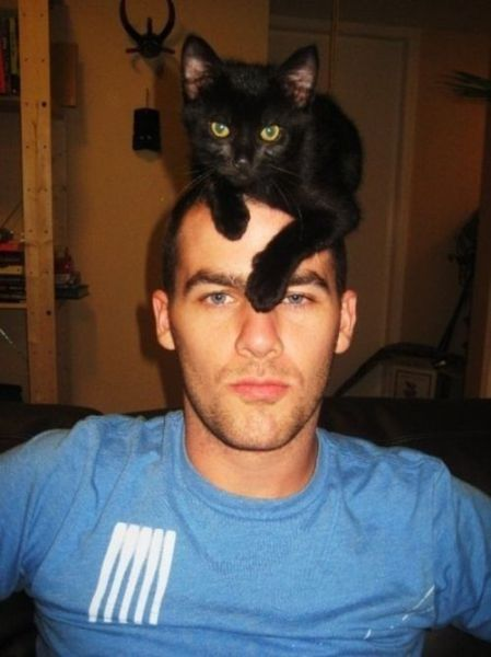 Cats as Hats