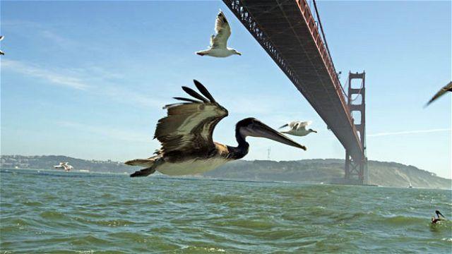 Earthflight gives a bird