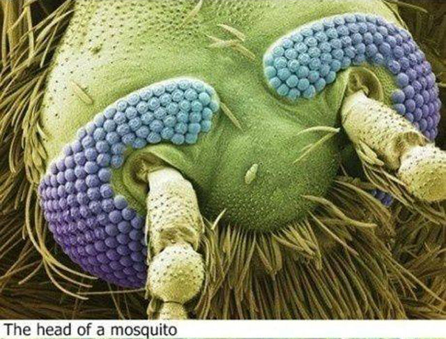The World under a Microscope