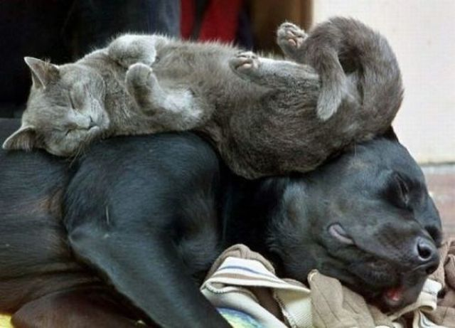 Adorable Zonked Out Animals