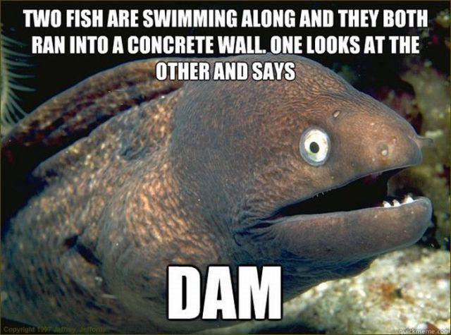 Funny Eel Memes