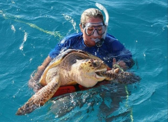 Unusual Rescue of a Sea Turtle