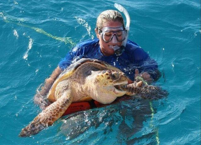 Unusual Rescue of a Sea Turtle