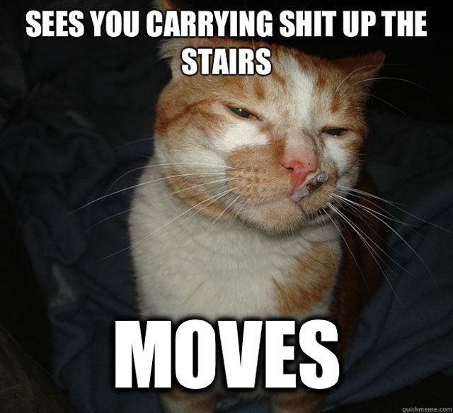 No-Pain-in-the-Butt Cat Memes