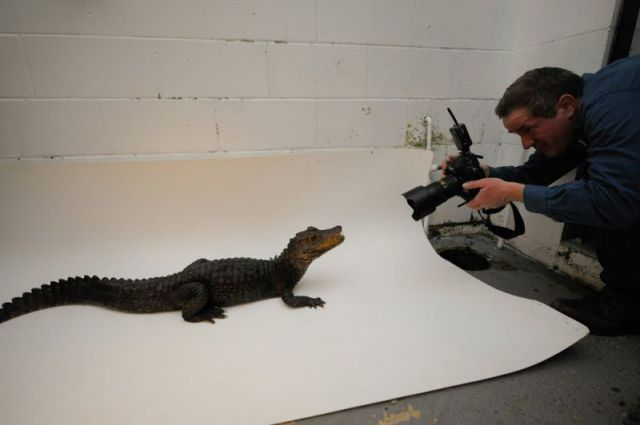 Photographing Animals for National Geographic
