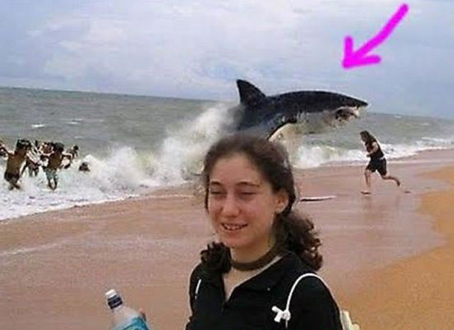 Animal Photobombs Shark Attack-img.izismile.com