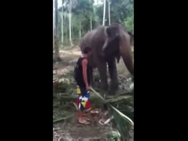 Elephant Gets Rid of Annoying Tourist