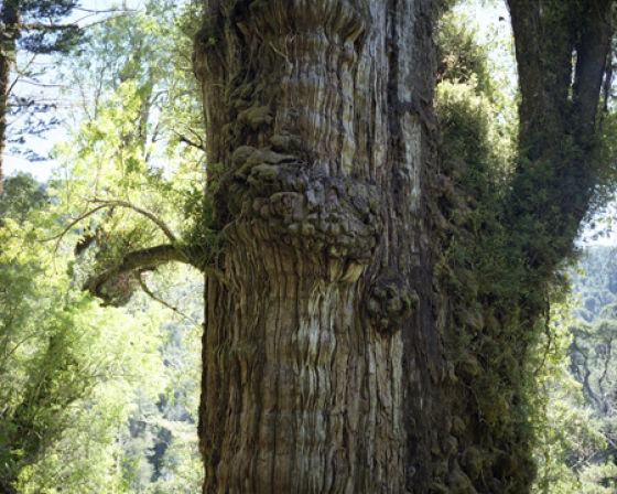 Nature's Toughest Long-Livers