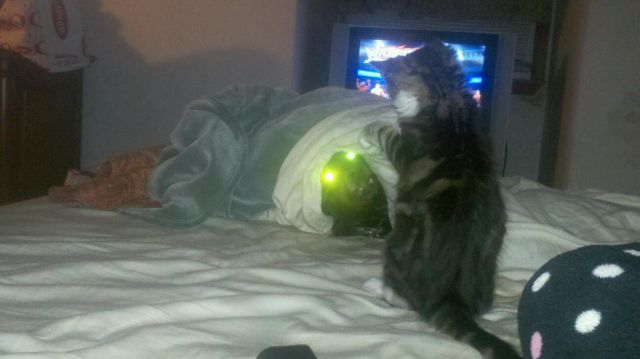 Demon Dog Meets Kittens Gone Wild!!!