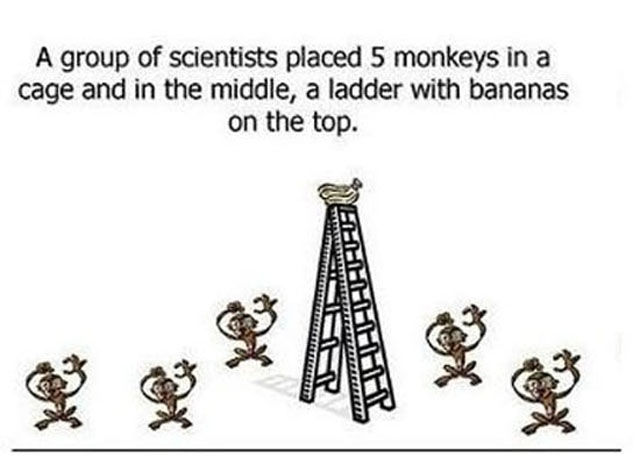Curious Monkey Experiment
