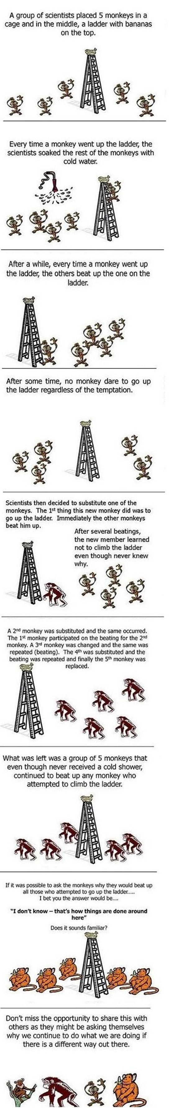 Curious Monkey Experiment