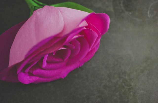 Beautiful DIY Rose for your beloved one