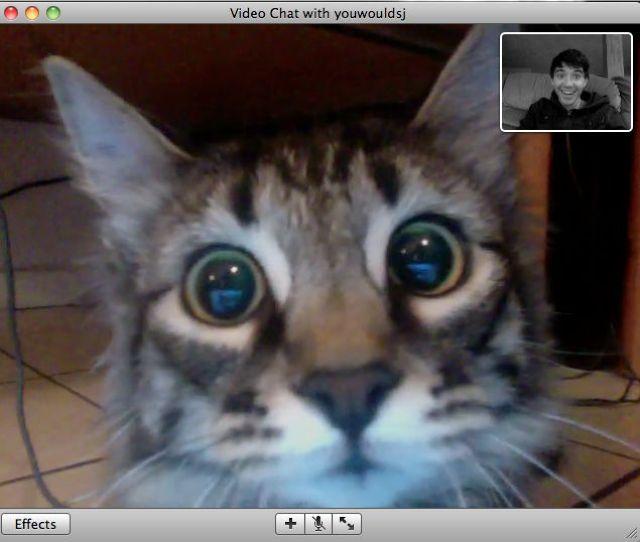 Videoconferencia con tu gato
