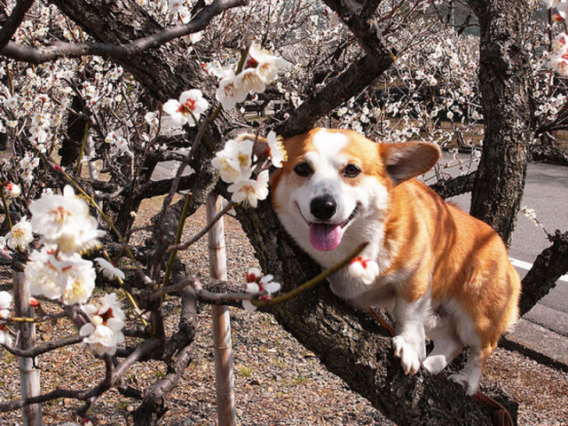 What Corgis Like the Most