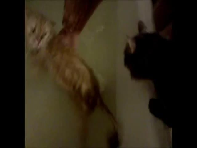 Cat Wants to Save Its Girlfriend from the Evil Bathtub