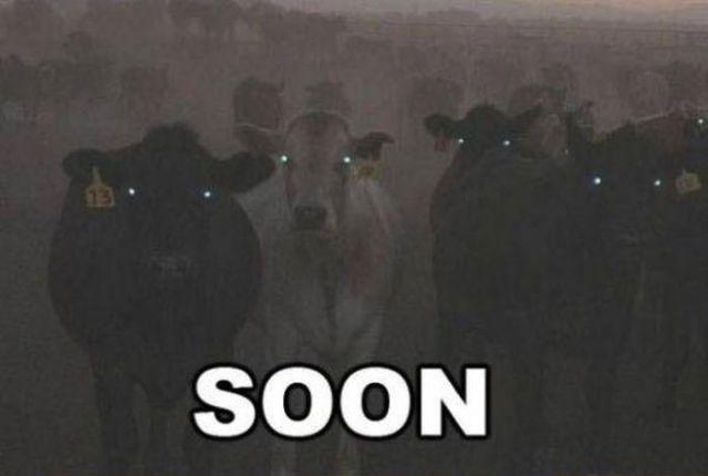 "30 Funny Soon Meme Pics: ""Soon"" Meme Collection (17 Pics)"