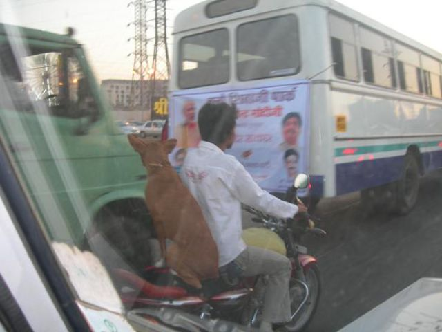 Only in India. Part 3