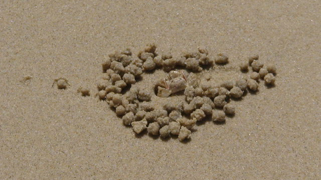Spectacular Sand Pictures Left by Crabs