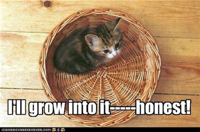Hilarious Cute Cats