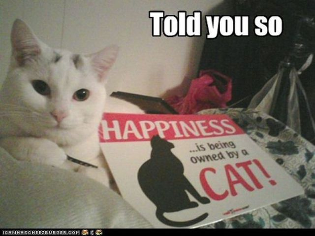 Hilarious Cute Cats