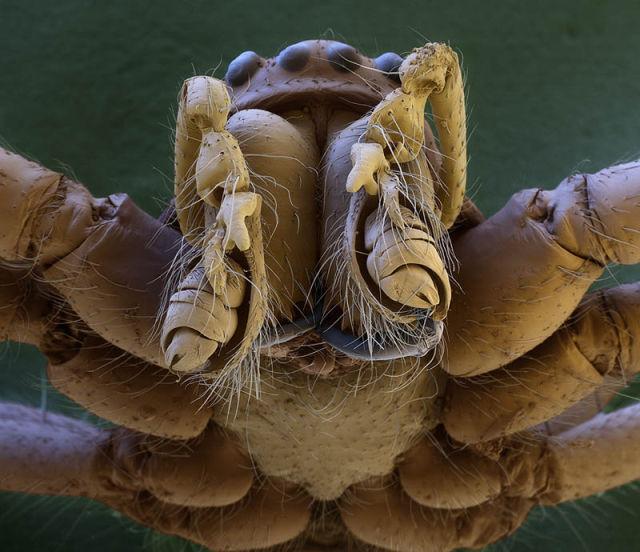 Amazing World of Microphotography