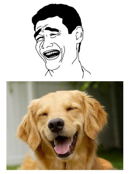 Matched Dog and Rage Face Memes