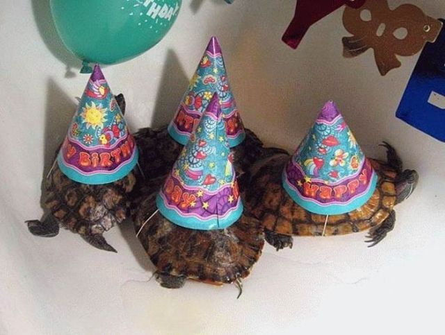 Animals Having Party