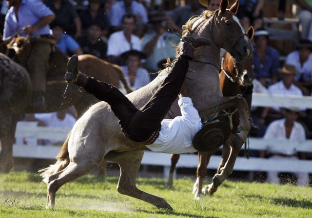 Untamed Horses Throw Off Their Riders