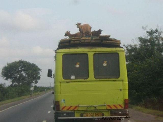 Africa Is Unique