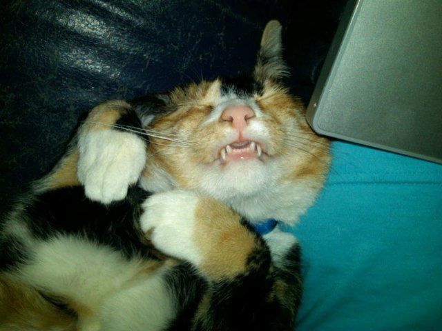 Amusing Tireless Cat