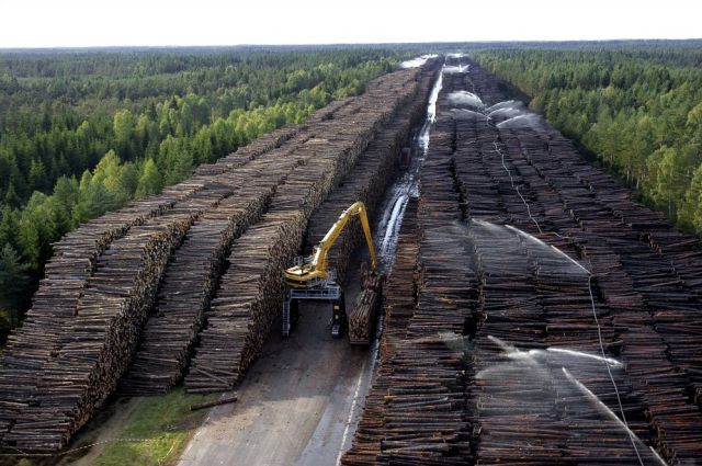 World's Biggest Timber Storage
